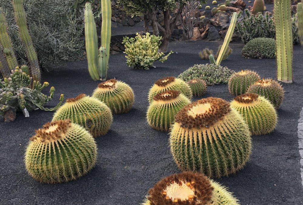 Wat je moet weten over de cactus-leider die uitbarst in woede…
